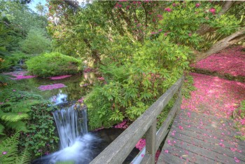 Bridge of Petals