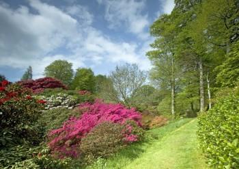 Lukesland Gardens2