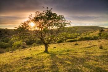 _MG_3938_39_40_Harford Tree Sunburst mod