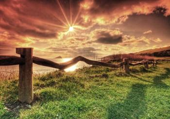 Organic Fence