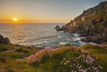 IMG_7220Pinks and Crowns Botallack