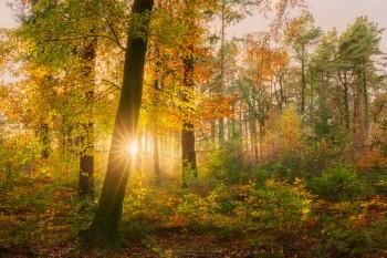 02-11-20-Buckland-on-Moor-Woods-Light-Burst5D3_8844Watermark