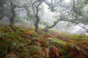 03-09-20-Foggy-Wotter-Wood-5D3_4962Watermark