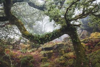 03-09-20-Foggy-Wotter-Wood-Horizontal-Ferny-branch5D3_4895Watermark
