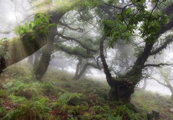 03-09-20-Foggy-Wotter-Wood-Trial-Luminar5D3_4857Watermark
