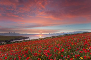 06-06-19-West-Pentire-Poppy-Sunset-IMG_8048-sharpened