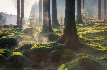 06-12-20-Bellever-Sun-Rays-Steaming-Trees5D3_2049Watermark