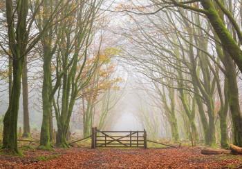 07-11-20-Bellever-Woods-Mist-Gate-5D3_0322Watermark