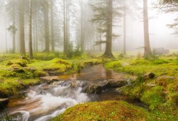 07-11-20-Bellever-Woods-Mist-Stream5D3_0254Watermark