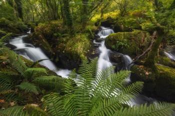 08-09-20-Peter-Tavy-Falls-Dawn-Fern-Landscape5D3_5162Watermark