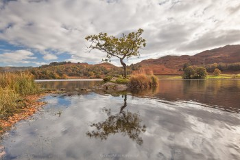 21-10-19-Lone-Tree-Rydal---Natural-IMG_3740