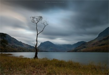 23-10-19-Buttermere-Lake-Lone-Tree-LE-IMG-CROP