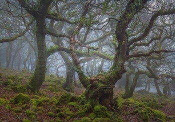 27-01-21-Wotter-Drizzle-Fog-Trunk-5D3_4878Watermark