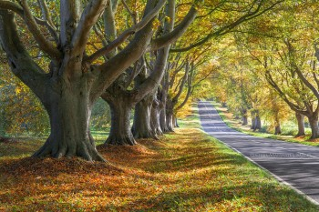 29-10-18-Dorset-in-Autumn-Day-2---Kingston-Lacy-IMG_9405