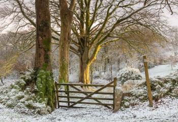 31-12-20-Bridestowe-Snow-Golden-Gate5D3_3577Watermark