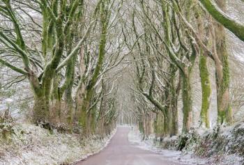 31-12-20-Bridestowe-Snow-Green-Avenue5D3_3589Watermark