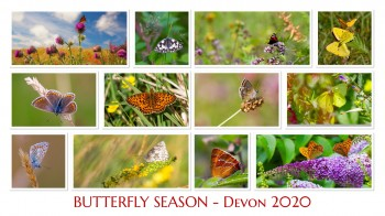 COVER-v3-Butterfly-Collage