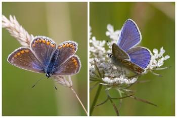 Female-Blue-CollageWatermark