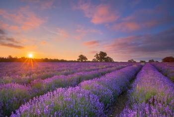 IMG_2910-11-07-15-Somerset-Lavender-Sunrise-Sunburst-17-40mm-V2-Warm