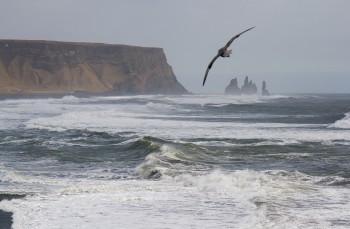 Reynisfjara-Beach-_MG_0233