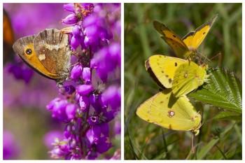 Yellow-and-Gatekeeper-CollageWatermark