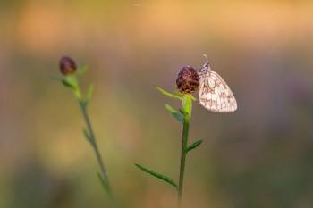 18-07-21-Dawn-Bircham-Butterflies-ORANGE-LIGHT5D3_6038Watermark